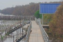 Härlig landskapsommar som är säsongsbetonad av blå paviljong med vandringsledet eller gångbanan i mangroveskog på den Bangpu rekr Royaltyfri Foto