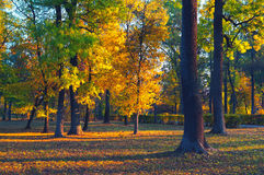 Härlig landskapvisningskog på solig sommardag Royaltyfri Fotografi