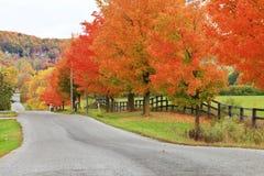 Härlig landsväg i höstlövverk Royaltyfria Foton
