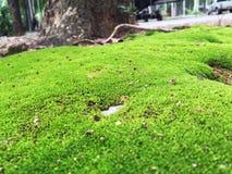 härlig lawn royaltyfria foton