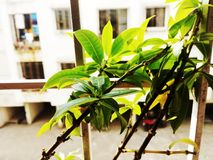 härlig leaf Arkivbild