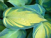 Härlig leaf Royaltyfri Foto