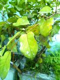 Härlig leaf Arkivbilder