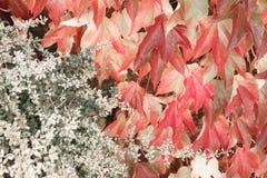 Härlig leafbakgrund Royaltyfri Fotografi