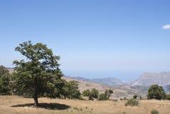 Härlig liggande av Nebrodi berg Arkivfoto