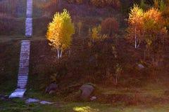 härlig liggande för höst skog september royaltyfri foto