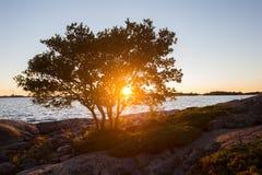härlig liggandesolnedgång Solen skiner till och med filialerna av trädet arkivbilder