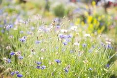 Härlig lilablomma i trädgård Arkivfoton