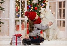 Härlig liten flicka som kramar en stor vit hund i julstree royaltyfria bilder