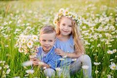 Härlig liten flicka som lite kramar pojken i ett fält av chamomien royaltyfri bild