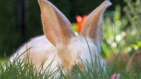 Härlig liten kanin som vilar i trädgården