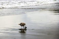 Härlig liten seagull på stranden av havet eller havet arkivbild