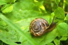 Härlig liten snigel på det gröna bladet Arkivfoto