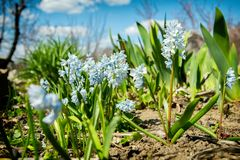 Härlig liten trädgård för vita blommor på våren Arkivbild