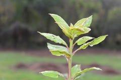 Härlig liten växtståendebild Royaltyfri Fotografi