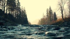 Härlig liten vattenfall i skog arkivfilmer