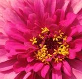 Härlig ljus blomma Royaltyfria Foton