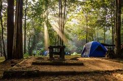 härlig ljus morgon Fotografering för Bildbyråer