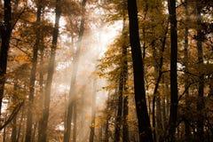 härlig ljus parkquiet Fotografering för Bildbyråer