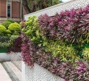 Härlig lodlinjeträdgård i mitten av Kuala Lumpur Royaltyfria Bilder