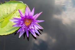 Härlig lotusblommablomma på vattnet Royaltyfria Foton