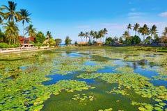 Härlig lotusblommalagun i Candidasa, Bali Arkivbild