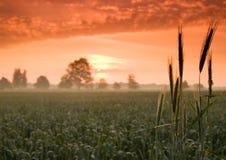 härlig lugna soluppgång Fotografering för Bildbyråer