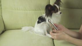 Härlig lycklig tonårs- flicka som meddelar i smartphone och med hennes video för hundmateriellängd i fot räknat stock video