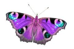Härlig mång--färgad fjäril med öppna vingar Fjärilen isoleras på den bästa sikten för vit bakgrund, ingen skugga arkivfoton