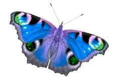 Härlig mång--färgad fjäril med öppna vingar Fjärilen isoleras på den bästa sikten för vit bakgrund, ingen skugga royaltyfri foto