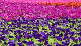 Härlig mångfärgad matta av blommor royaltyfria bilder