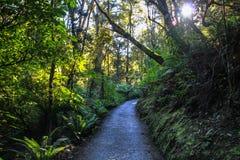 Härlig mörk nyazeeländsk skog royaltyfri fotografi