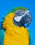 härlig macawpapegojastående Fotografering för Bildbyråer