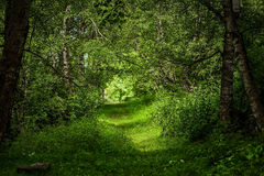 Härlig magisk skog Arkivfoton