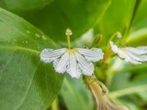 Härlig makro av exotiska konstiga blommor i vår - 8 Arkivbilder