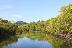 Härlig mangroveskog Royaltyfri Bild