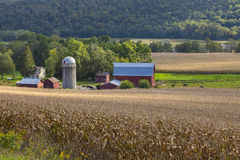 Härlig mejerilantgård och cornfield arkivfoto