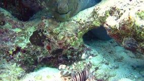 Härlig miljö för fisk och för rev rött hav lager videofilmer