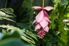 Härlig mjuk blomma i den tropiska trädgården Royaltyfria Foton