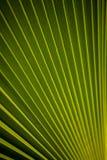 Härlig modell av en palmblad Royaltyfria Foton