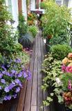 Härlig modern terrass med många blommor royaltyfri foto