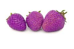 Härlig, mogen stor ljus jordgubbe på den isolerade bakgrunden Isolatlila, purpurfärgad jordgubbe Arkivfoton