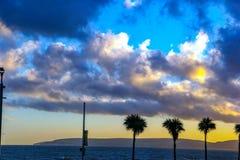 Härlig molntextur på stranden för Durdle dörrhav med tre palmträd Royaltyfri Bild