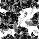 Härlig monokrom sömlös blom- modell Arkivfoton