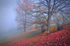 Härlig morgon i den dimmiga hösten Arkivbild