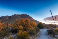 Härlig morgon i Guadalupe Mountains National Park arkivbild