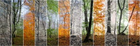 Härlig morgonplats i skogen, ändring av fyra säsonger Arkivfoton