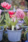 Härlig multiflowerssäng Arkivfoton