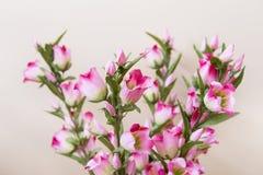 Härlig närbild för konstgjorda blommor Royaltyfri Foto