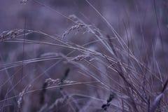 Härlig närbildmakro för torrt gräs mot en starkt unfocused bakgrund Natur konstfoto för affisch Arkivfoton
